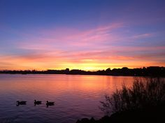 Poole Park at Sunset ♥