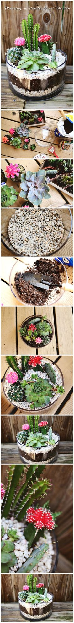 #Planting a #simple Cacti #Garden
