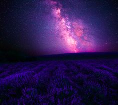 Fantasy Sky  Fantasy Purple Stars Starry Sky Field Lavender Milky Way Wallpaper