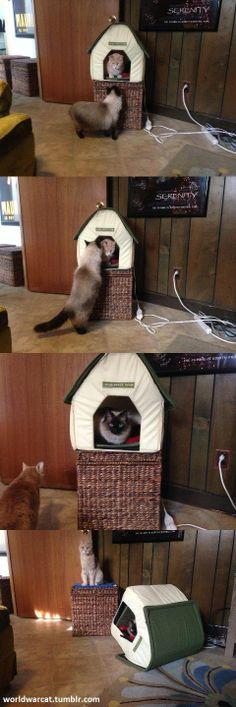 고양이집.jpg - clien