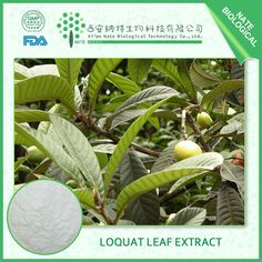 Loquat Leaf extract http://www.natesw.com/Copy%20of%20Pomegranate%20peel%20extract