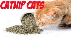 Cats On Catnip Funny Cats