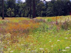 The meadow garden at @TrenthamEstate today @PictorialMeadow: