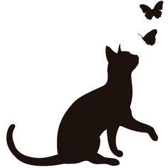 cat and butterflys
