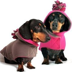 Winter coats for Doxies!