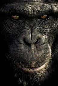 Barcelona-based artist Gabi Guiard humanize her chimp subjects, but she certainly sheds light on their individual personalities. Primates, Mammals, Nature Animals, Animals And Pets, Cute Animals, Wildlife Photography, Animal Photography, Portrait Photography, Beautiful Creatures