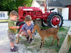 The Farm | Activities-Group, Animals, Attraction, Just for Kids