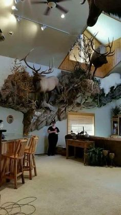 Magnificent Full Body Double Elk Mount.