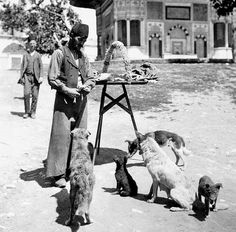 An Ottoman Simit Seller Sharing His Simits With Street Dogs, Turkey History, Street Dogs, Asia, History Of Photography, Fashion Photography, Slow Travel, Old Dogs, Ottoman Empire, Istanbul Turkey