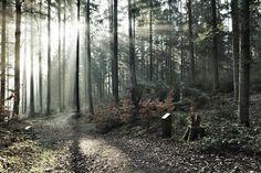 Morgens im Wald des Taubentals #schwäbischgmünd #Taubentals #Wetzgau #sonne #strahlen #nebel #wald #mawpix #matthiaswassermann @dxoone