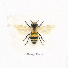 Watercolour illustration of a Honey Bee made by Evajuliet Watercolor Illustration, Watercolor Art, Bumble Bee Illustration, Diskrete Tattoo, Honey Bee Tattoo, Bee Painting, Vintage Bee, Dibujos Cute, Desenho Tattoo