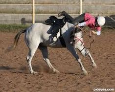 Funny Horse Riding Fails 10 Free Hd Wallpaper - Funnypicture.org Full Hd Wallpaper, Widescreen Wallpaper, Free Hd Wallpapers, Funny Girl Fails, Picture Fails, Crazy Friends, High Resolution Wallpapers, Horse Riding