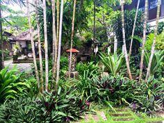 Made Wijaya's beautiful garden at Villa Bebek.