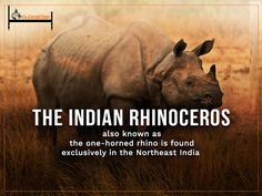 The Indian rhinoceros, also called the greater one-horned rhinoceros is a native to the Indian subcontinent.  Here is one of the marvelous facts about the Northeast India you might now know ! #BnBnation #Travel #NortheastIndia #Rhinoceros #Trivia #BnB