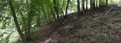 Mohutný val oppida. Trunks, Plants, Drift Wood, Tree Trunks, Plant, Planets