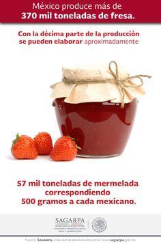 México produce más de 370 mil toneladas de fresa. SAGARPA SAGARPAMX #SomosProductores