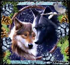 Winter Wolves in Love