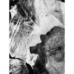"""""""anatomy of a tree - 1"""" Photo taken by @actuallymt on Instagram, pinned via the InstaPin iOS App! http://www.instapinapp.com (03/30/2015)"""
