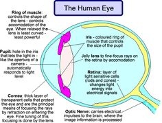 Eye on the ball the basics of how the human eyeball works school the eye great looking info site with videos physics based ccuart Choice Image