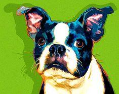 Boston Terrier artwork