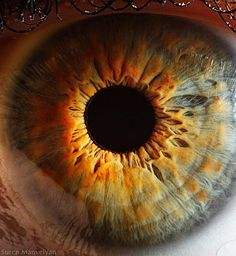 Extreme Close-Ups of the Human Eye 11