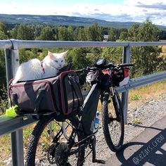 Picture time now when the sun is out in Adventure Cat, Norway, Baby Strollers, Bicycle, Sun, Children, Cats, Travelling, Pictures