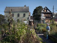 Growing food in the South Bronx