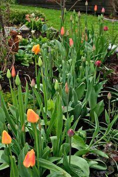Jardin quatre saisons on pinterest 3129 pins for Jardin 4 saisons albi