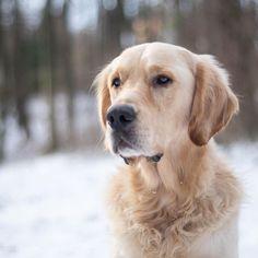 Hund als Ringträger 💍 . Am Monatg waren wir bei @oscar.filu um unsere Eheringe auszusuchen ♥️ Wir sind topmotiviert das Training mit… Oscar, Instagram Feed, Tricks, Dogs, Animals, Dog Owners, Pooch Workout, Animal Photography, Pets