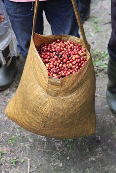 Coffee cherry weigh-in. Freshly harvested coffee cherries in Sulawesi Coffee Farm, Coffee To Go, Coffee Is Life, I Love Coffee, Coffee Shop, Coffee Bean Tree, Coffee Beans, Coffee Photos, Coffee Pictures