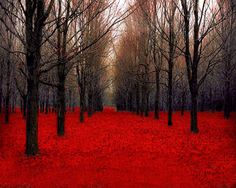 30x40 Large Wall Art Canadian Maple Forest Red Leaves by Raceytay, $210.00