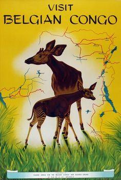 Miessen Visit Belgian Congo Okapi c.1950