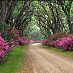 Dirt road.... Looks like low country...