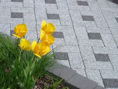 Sika Pave jointing products from Arcon Supplies