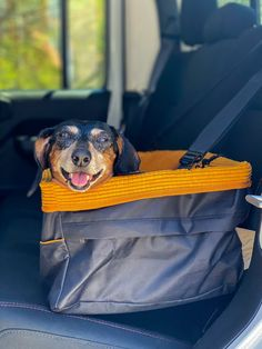 Dog Travel, Amazing Destinations, Puppy Love, Your Dog, Puppies, Dogs, Style, Swag, Cubs