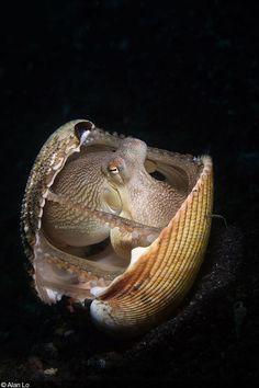 Octopus by Alan Lo