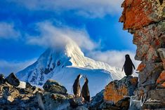 Penguins enjoying the warm sun in Antarctica