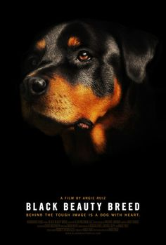 New Documentary | Black Beauty Breed. Now Available for PPR Purchase. Black Beauty Breed is a feature length documentary that brings you closer to the dog behind the perceived intimidating image and highlights the positive abilities and character traits that make the Rottweiler an incredible dog.
