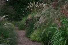 Lianne's Siergrassen in De Wilp->Ik ben door siergrassen gegrepen. Mijn doel: zoveel mogelijk soorten én toepassingsmogelijkheden laten zien. Daarom is bij de kwekerij een bezoektuin waar grassen laten zien wat ze in huis hebben! Bekijk de website voor de open dagen.