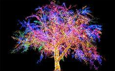 Magic Tree: Columbia, MO