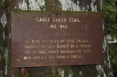 About 4 miles in along the Eagle Creek Trail, Columbia Gorge, Oregon.  08/2010.