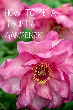 How to avoid gardening mistakes, save money and turn your garden into a thrifty thing of beauty.