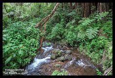 #BigIsland #Hawaii #AkakaFalls #Waterfall { #Triathlonlife #Training #Love #Travel } { via @eiswuerfelimsch } { #berlinrunnersontour #berlintriathletesontour } { #pinyouryear } { #wallpaper } { www.eiswuerfelimschuh.wordpress.com }