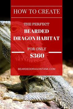 Stop wasting tons of money - Setting up a dragon habitat is cheap and easy with this guide! http://beardeddragontank.com/create-a-huge-bearded-dragon-habitat-for-360 #beardeddragon #reptile #reptilecare #beardeddragontank