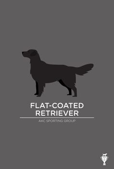 Flat-Coated Retriever Art Print Bethany ng
