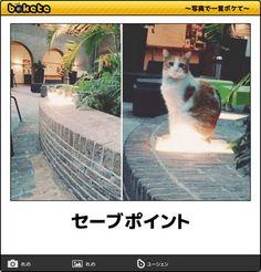 猫bokete(ボケて)秀逸ボケ - NAVER まとめ