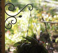 Mão-francesa - Folha de Florença - #design #jardim #garden #paisagismo… Mais