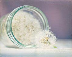 Fine Art Photograph, Mason Jar Full of Billowy Dandelions, Dreamy. Dandelion Clock, Dandelion Wish, Dandelion Seeds, White Dandelion, Cool Tones, Hopeless Romantic, Whimsical Art, Make A Wish, Mason Jars