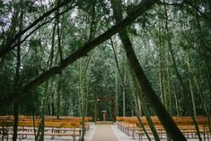 Nestled deep in the heart of a South African forest, Klarese and Jonker's wedding at Die Woud will make you think you've fallen into a fairytale.