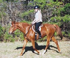 The Biggest Schooling Arena: 40 Things to Do on a Casual Trail Ride